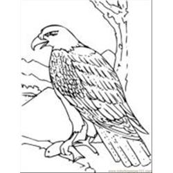 Coloring Book Bald Eagle Free Coloring Page for Kids