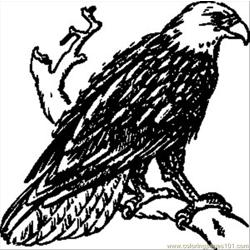 Papapishu Bald Eagle.svg.med Free Coloring Page for Kids