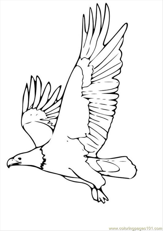 tures pages photo eagle p coloring page - Eagle Color Page