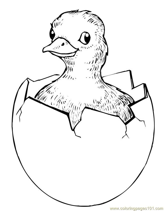 Easter chick hatching Coloring Page