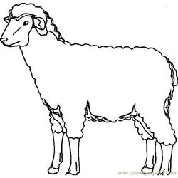 Lambs coloring page