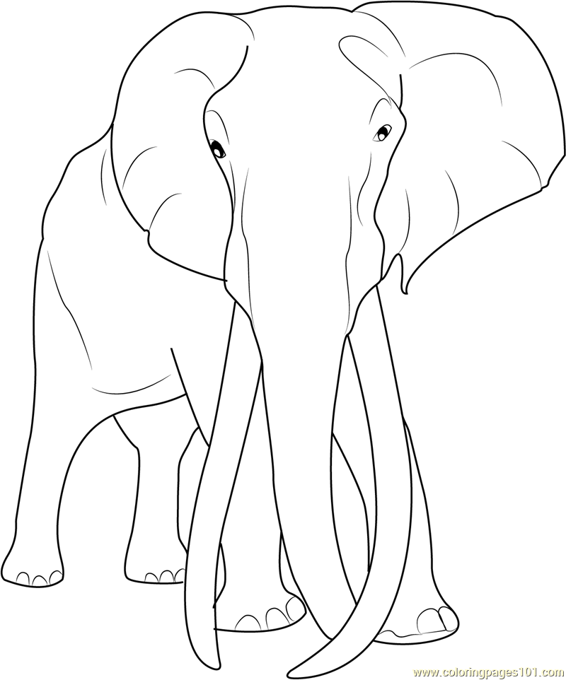Adult Elephant Coloring Page Free Elephant Coloring