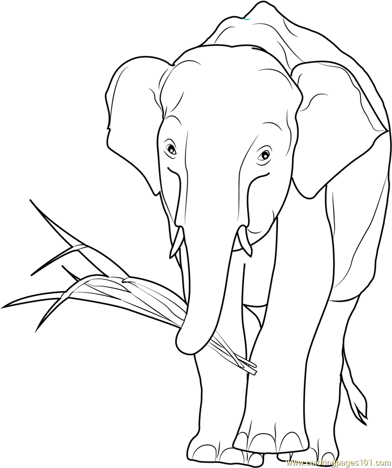 African Elephant Eating Coloring Page