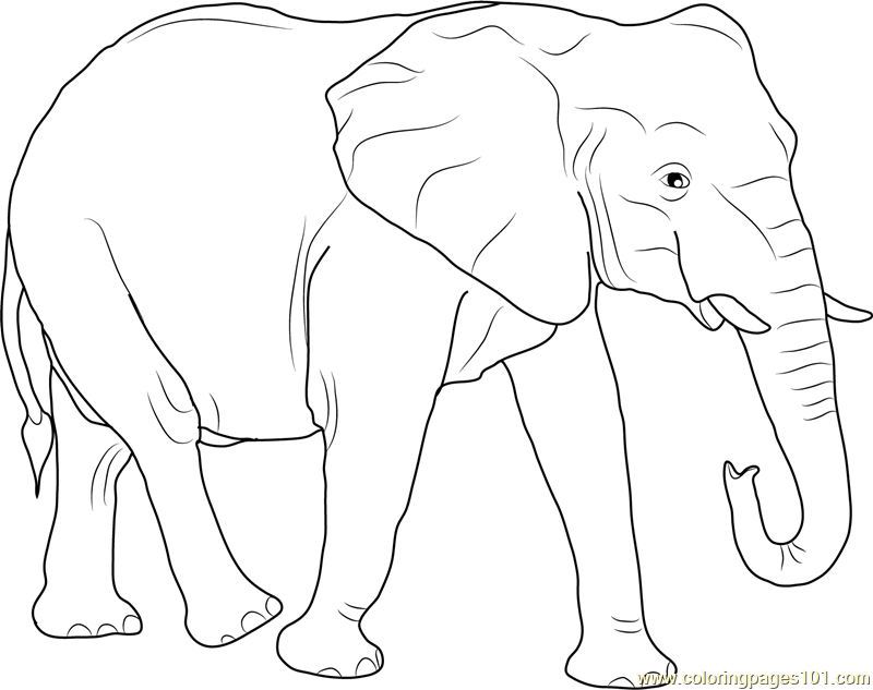 African Elephant Coloring Page - Free Elephant Coloring Pages ...