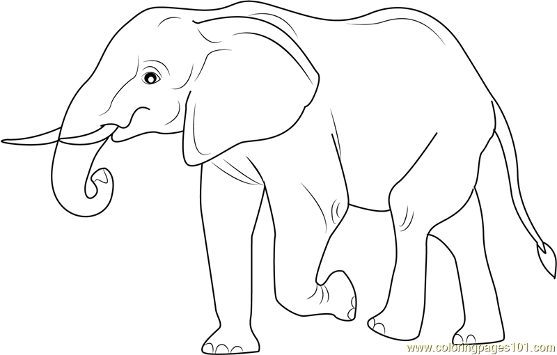 Elephant Walking Away Coloring Page