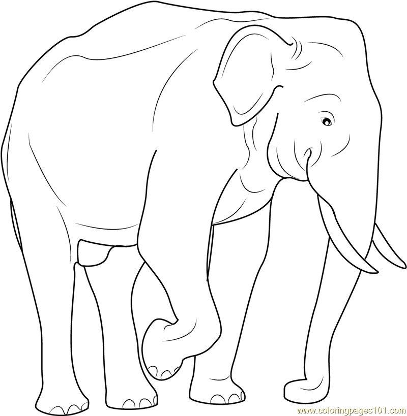 indian elephant coloring page - Free Elephant Coloring Pages