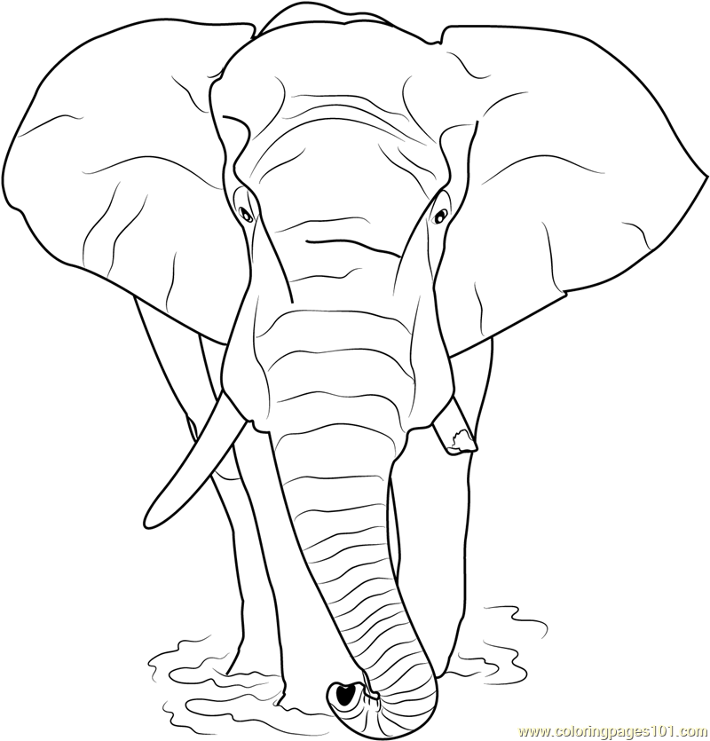 Loxodonta africana Coloring Page