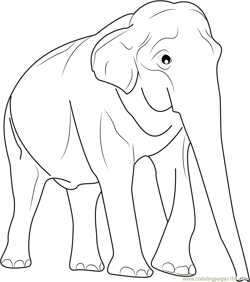 elephant coloring pages printable coloring pages of elephants - Coloring Pages Indian Elephants