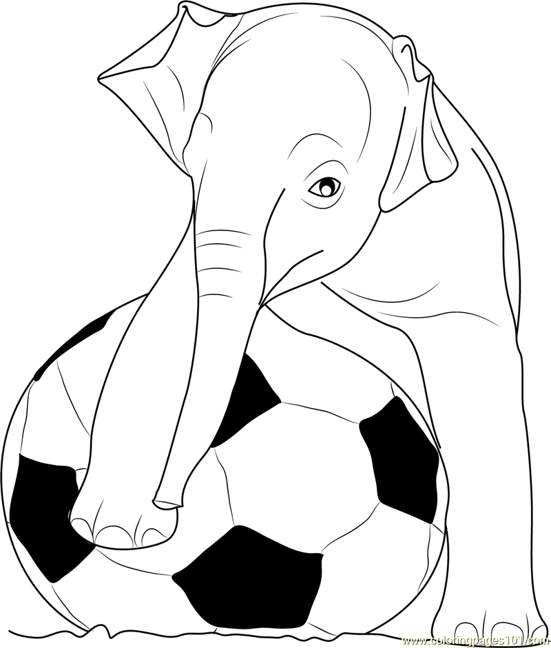 Elephant Coloring Pages  Printable Coloring Pages of Elephants