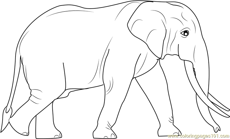 Get This Mandala Elephant Coloring Pages 7e3v9 ! | 483x800