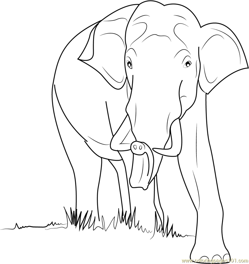 Wild Elephant Coloring Page