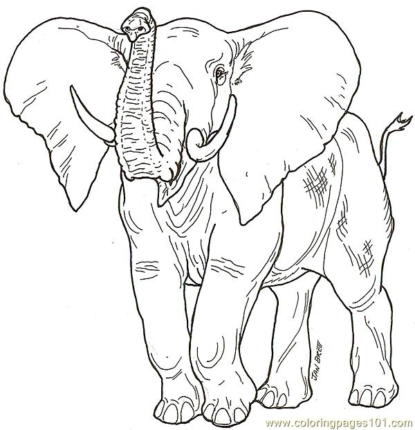 Babaelephant2 Coloring Page