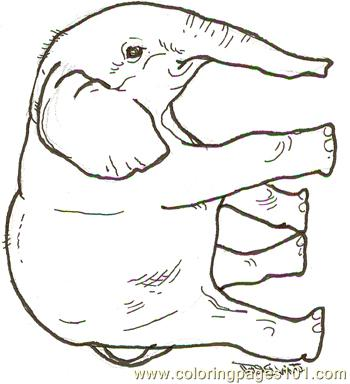 Baby Elephant Reversed Coloring Page Free Elephant Coloring