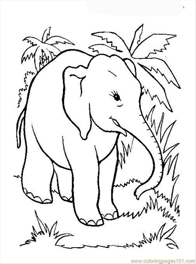 Elephant Coloring Page 12 Coloring Page