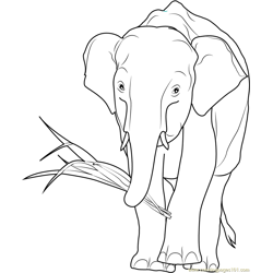 African Elephant Eating Free Coloring Page for Kids