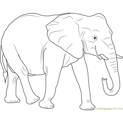 African Elephant Free Coloring Page for Kids