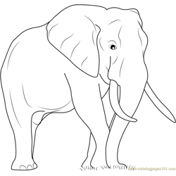 Elephant The Big Animal Free Coloring Page for Kids