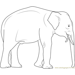 Elephas maximus Free Coloring Page for Kids