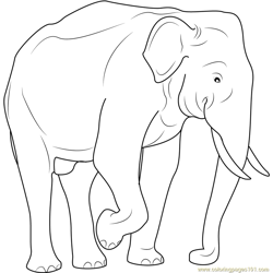 Indian Elephant Free Coloring Page for Kids