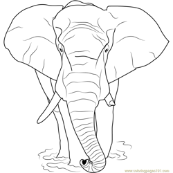 Loxodonta africana Free Coloring Page for Kids