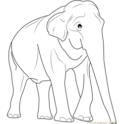 Male Asian Elephants Free Coloring Page for Kids
