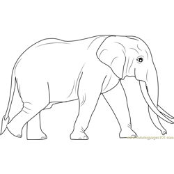 Sri Lankan Elephants Free Coloring Page for Kids