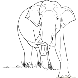 Wild Elephant Free Coloring Page for Kids
