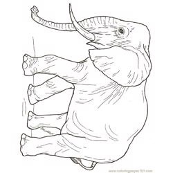 Babyelephant Free Coloring Page for Kids