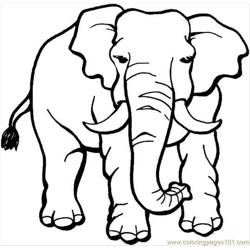 Elephant 18 Coloring Page