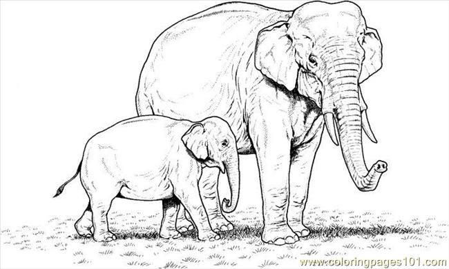 Two Elephants Coloring Page Coloring Page