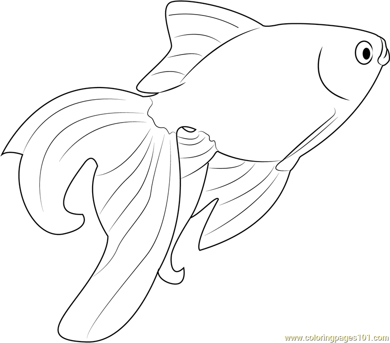 beautiful goldfish coloring page