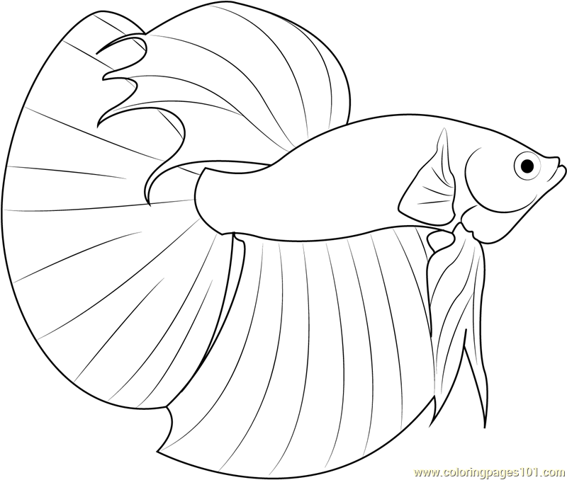 betta fish coloring page - Fish Coloring Pages