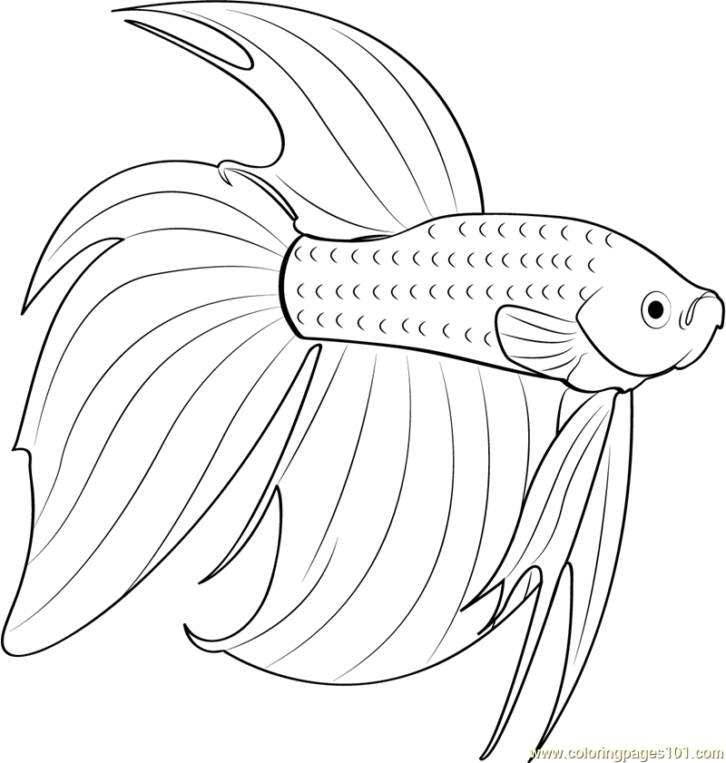Betta Red Fish Coloring Page  Free Other Fish Coloring Pages