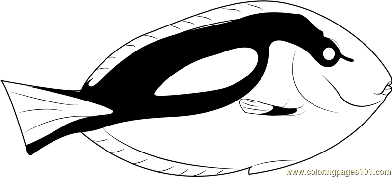 blue tang fish coloring page