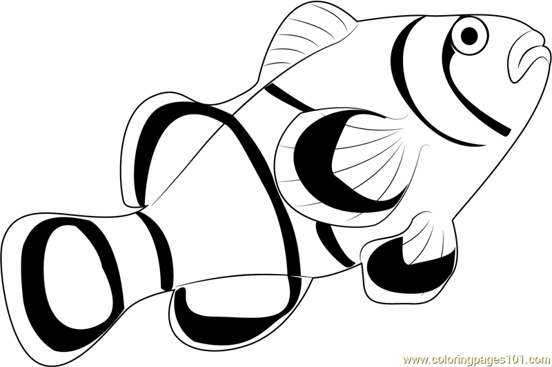 Clown Fish Coloring Page Free Other Fish Coloring Pages Clown Fish Coloring Pages