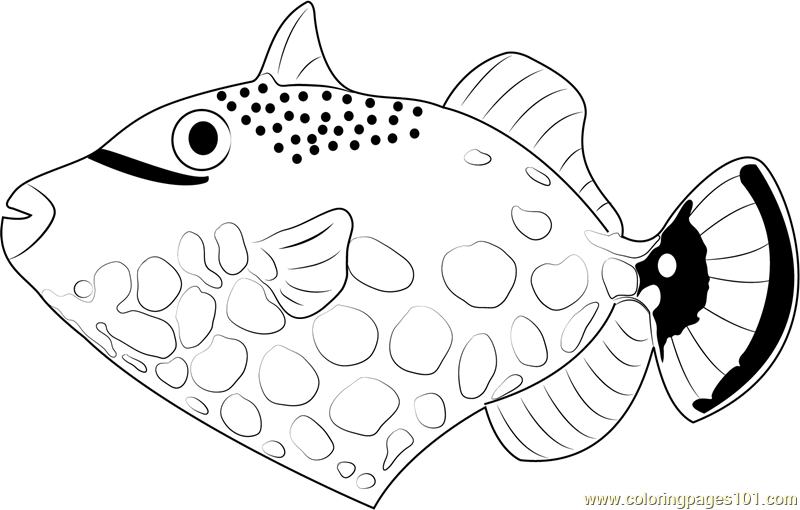 Clown Trigger Fish Coloring Page