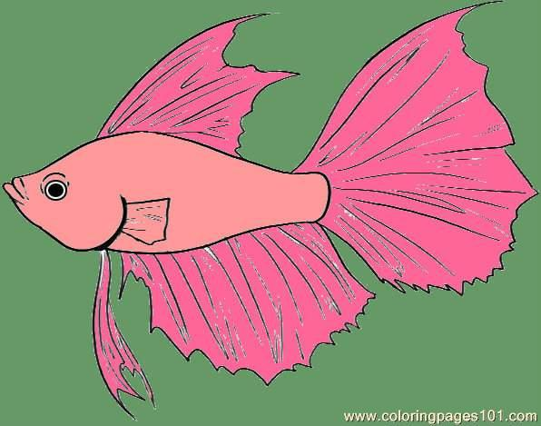Fish Step 4 Coloring Page
