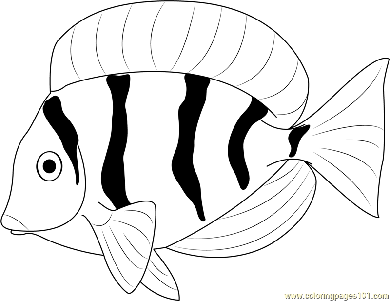 Fresh Water Fish Coloring Page