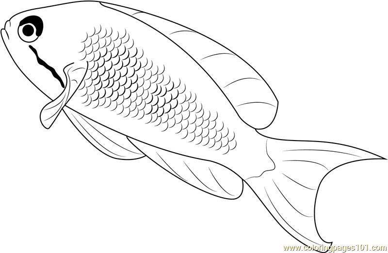 Lyretail Anthias Fish Coloring Page