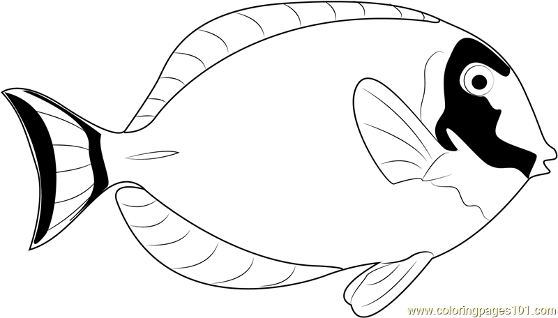 Powder Blue Surgeonfish Coloring Page Free Other Fish