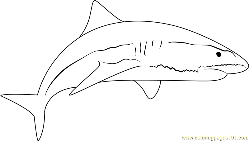 Great White Shark Coloring Page Pages Animals Town Picture