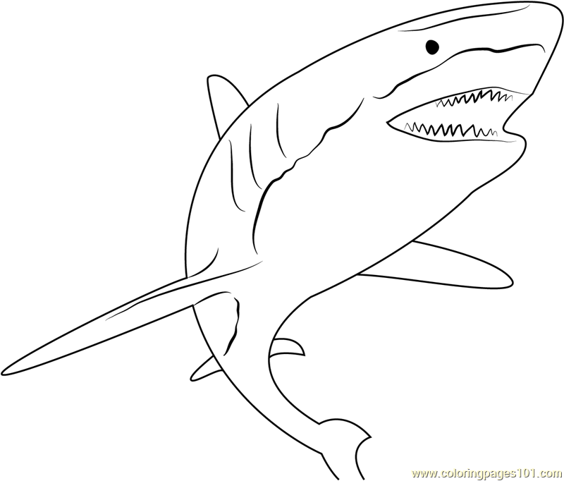 Shark Attack Coloring Page Free