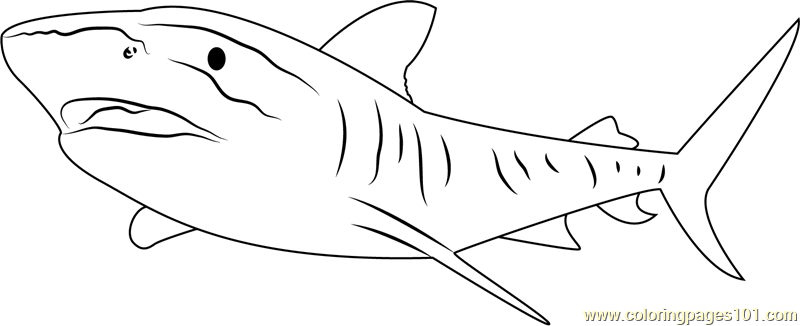 Tiger Shark Great Barrier Coloring Page - Free Shark ...