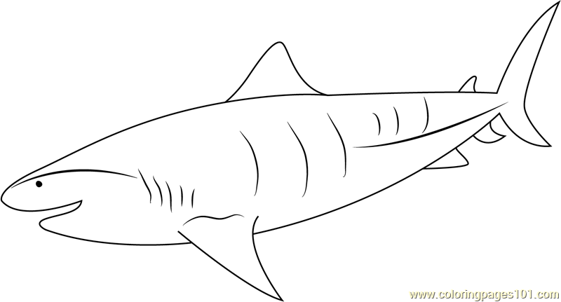Tiger Shark Underwater Coloring Page