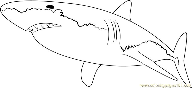 White shark coloring page free shark coloring pages for Coloring pages shark