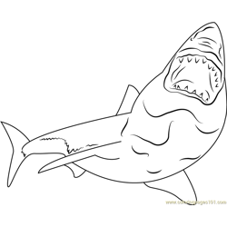 Great White Shark Free Coloring Page for Kids