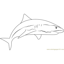 Sand Tiger Shark Free Coloring Page for Kids