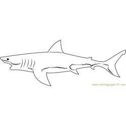 Shark Model Free Coloring Page for Kids