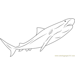 Tiger Look Shark Free Coloring Page for Kids