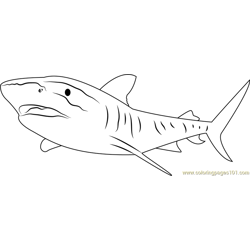 Tiger Shark Great Barrier Free Coloring Page for Kids